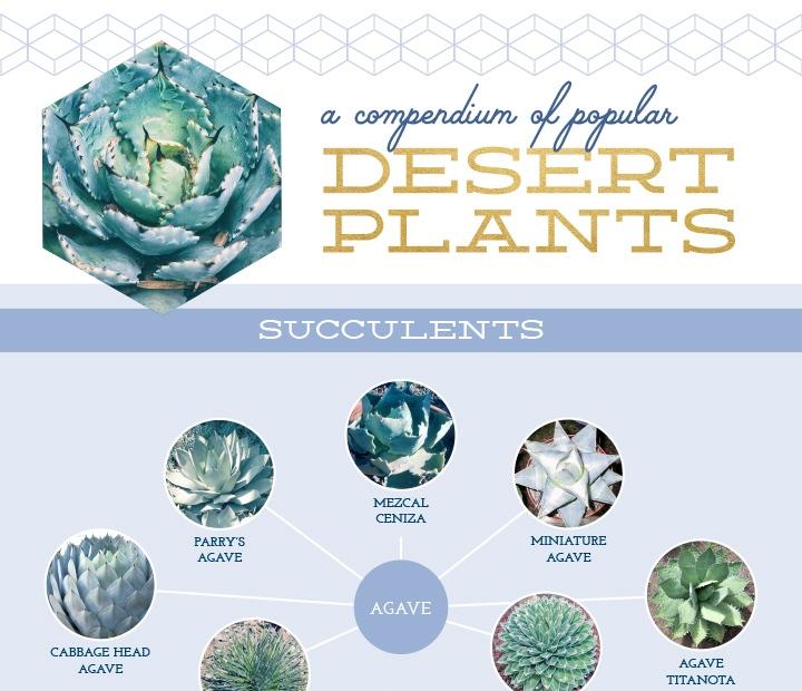 plant infographic example
