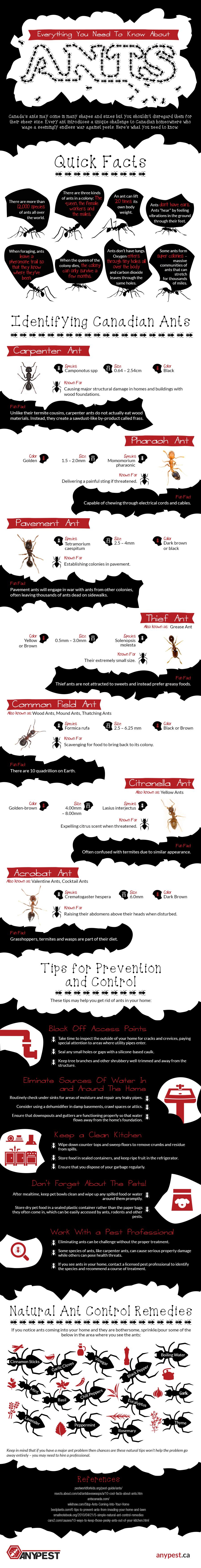 ants infographic