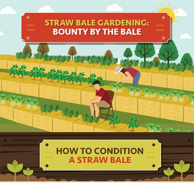 gardening infographic example